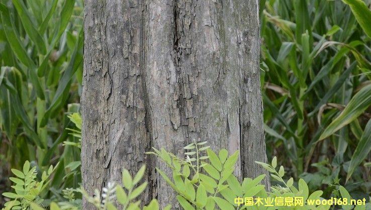 交趾黄檀(大红酸枝)木材的交易现状与预测