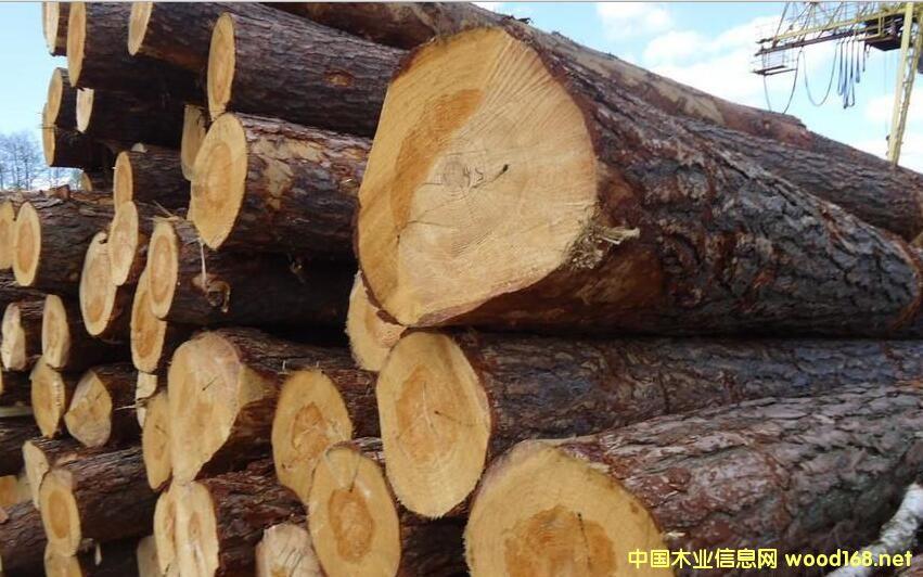 厦门自贸区东渡口岸木材以乌克兰樟子松原木为主