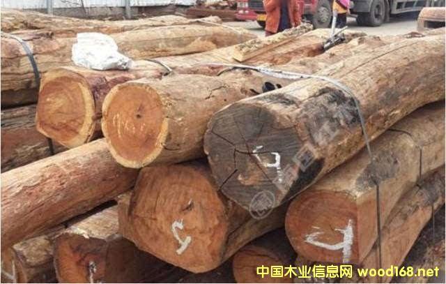 缅甸花梨近期或将占木材市场主导