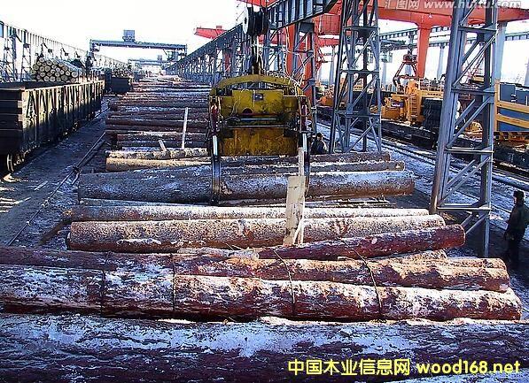 满洲里口岸跃居全国最大俄罗斯木材进口口岸