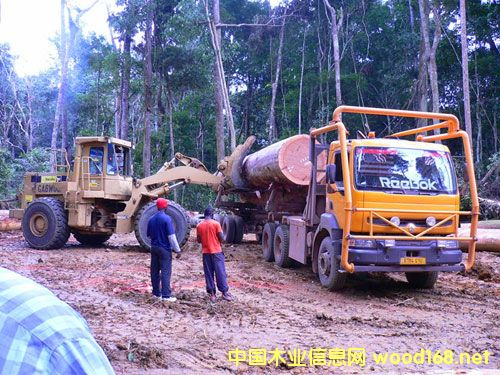 加蓬爱龙公司-原木采伐