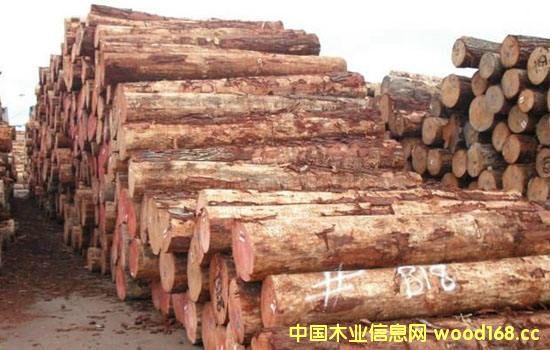 新西兰辐射松原木持续涨价,国内国外市场冰火两重天