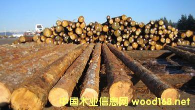 北美针叶材产量二季度增长3%