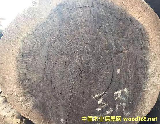 沉贵宝(二级黑檀)开始走俏木材市场