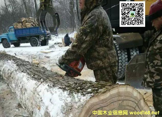 吉林中信美来木业实施走出去战略