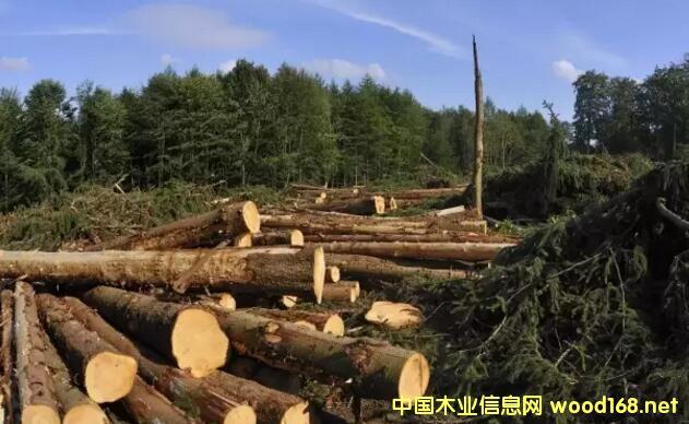 芬兰木材市场周报:八月的第一周开始回温-中国木业