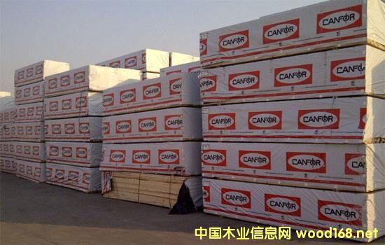 北美材行情分析:SPF在中国木材市场的销售放缓