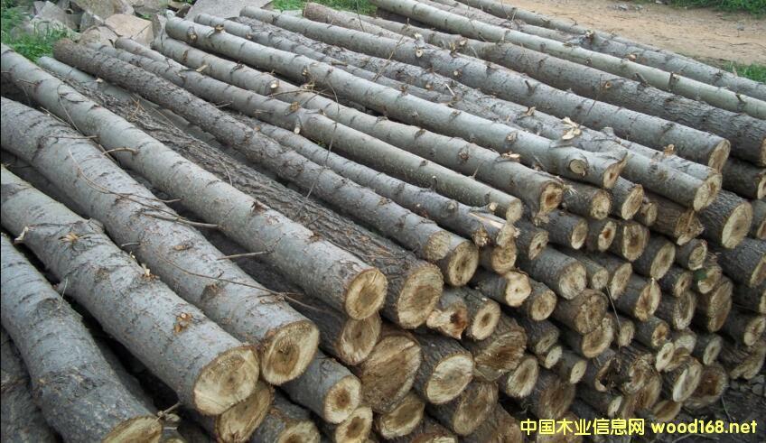 2017年山东杨木原木需求分析