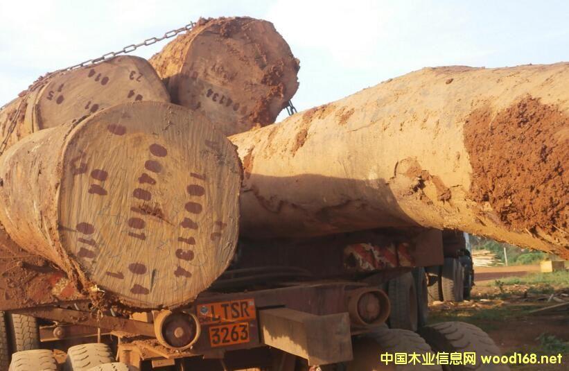 喀麦隆2017年起将对原木出口征收20%的出口税
