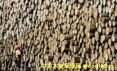 全球木材涨价风暴已影响到新西兰原木价格