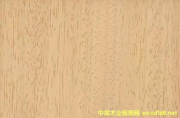 白梧桐木材纹理