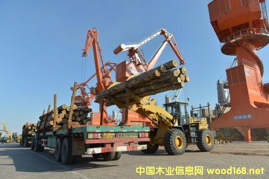 曹妃甸文丰木材码头:打造北方最大木材交易平台