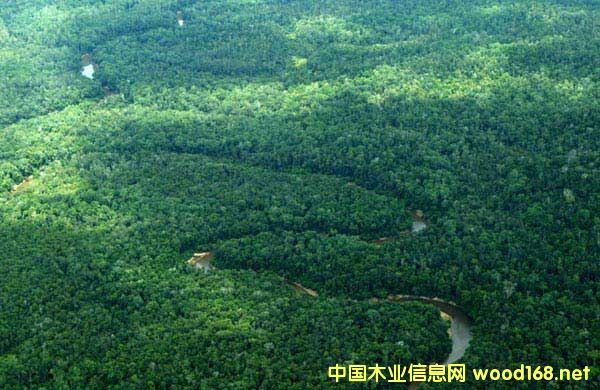 巴新材树种资源概况