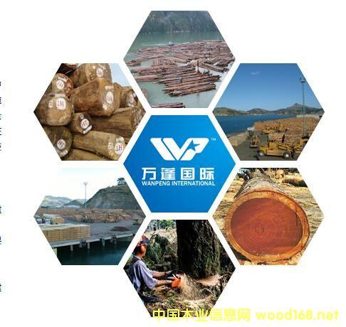 万蓬国际:中国最大的非洲木材采伐进口商之一