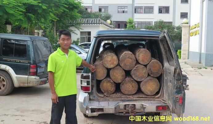 云南宁洱半年查获非法偷运木材179.75立方米