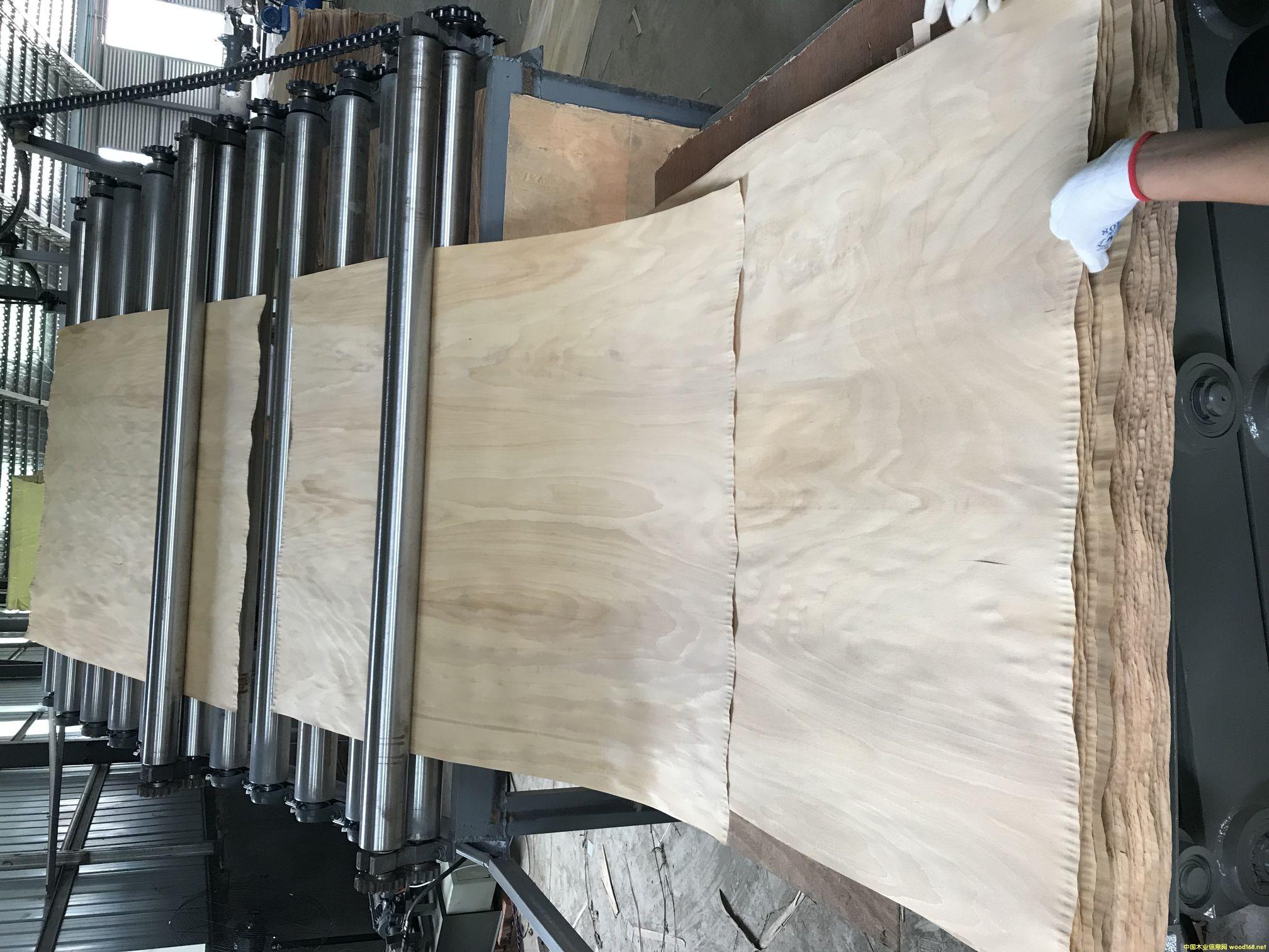 榉木木皮辊筒烘干