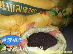 任豆树种子翅荚木种子