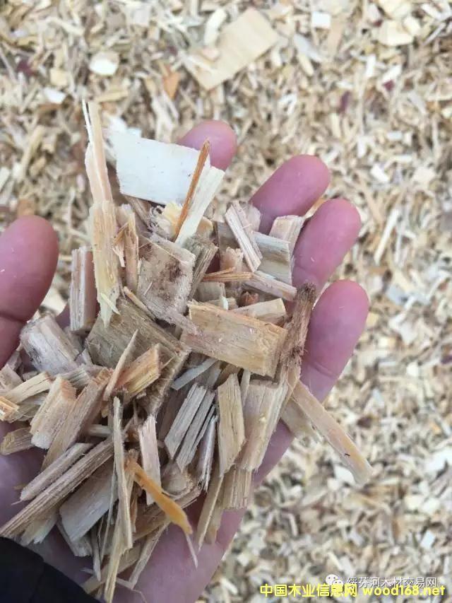 跨境代购:俄罗斯落叶松旋切单板废料木片