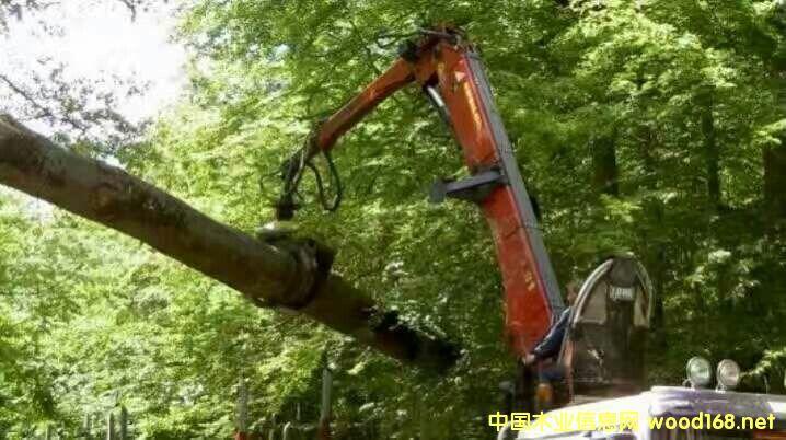 欧洲榉木一手货源