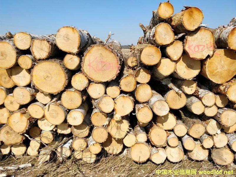 桦木原木期货