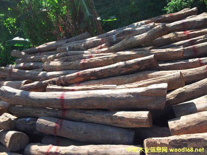 出售进口缅甸黑酸枝原木
