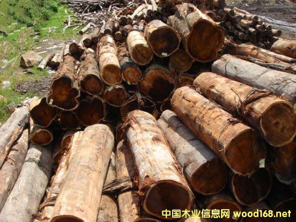 出售进口大叶相思马来相思木原木