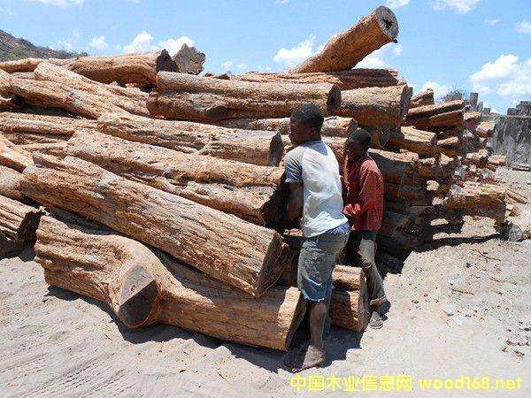 出售进口莫桑比克红贵宝原木