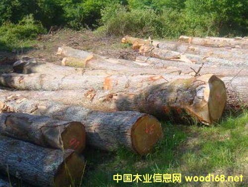 出售进口白橡原木