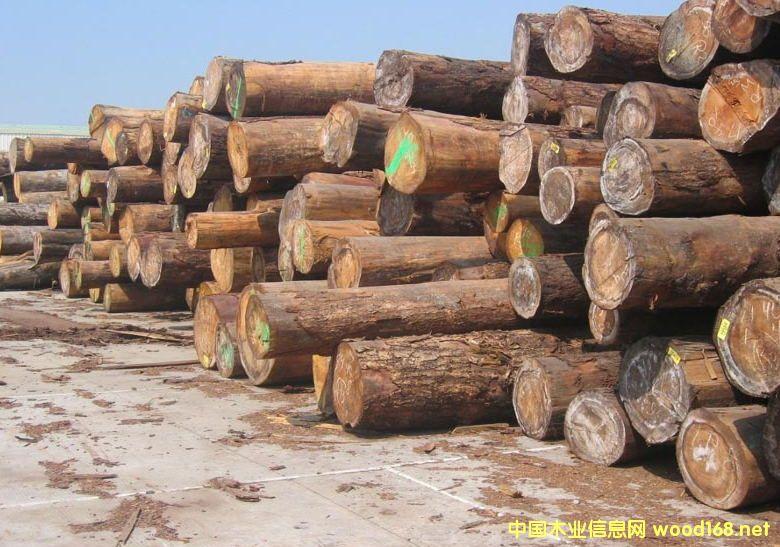 出售进口加拿大铁杉原木