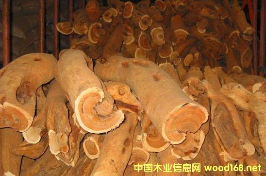 出售进口檀香木原木