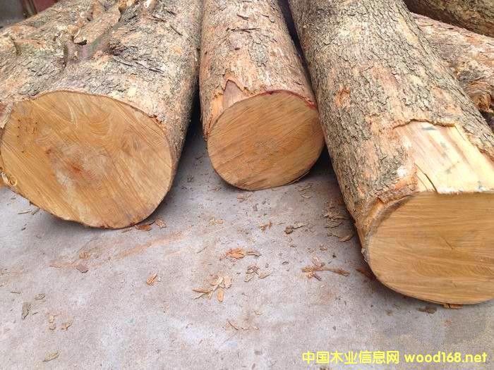 金丝楠木原木