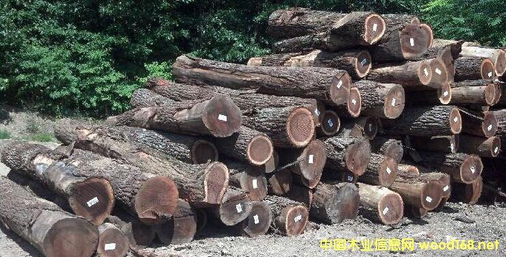 出售进口美国黑胡桃原木