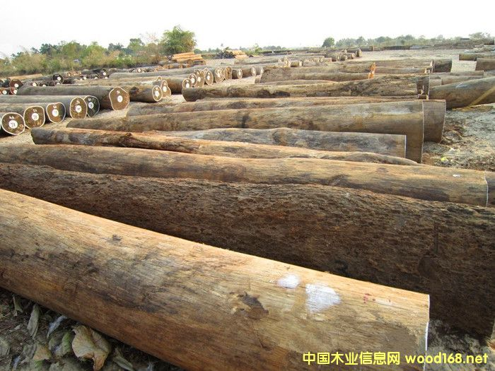 出售进口莫桑比克皮灰原木