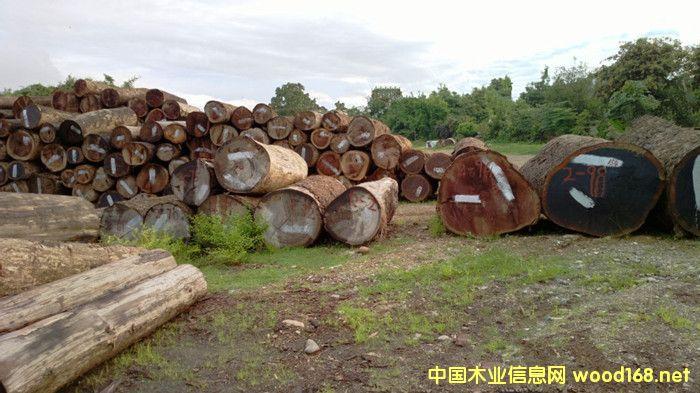 出售进口缅甸红酸枝原木