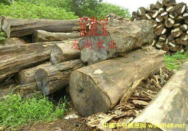 出售进口莫桑比克非洲沉贵宝原木