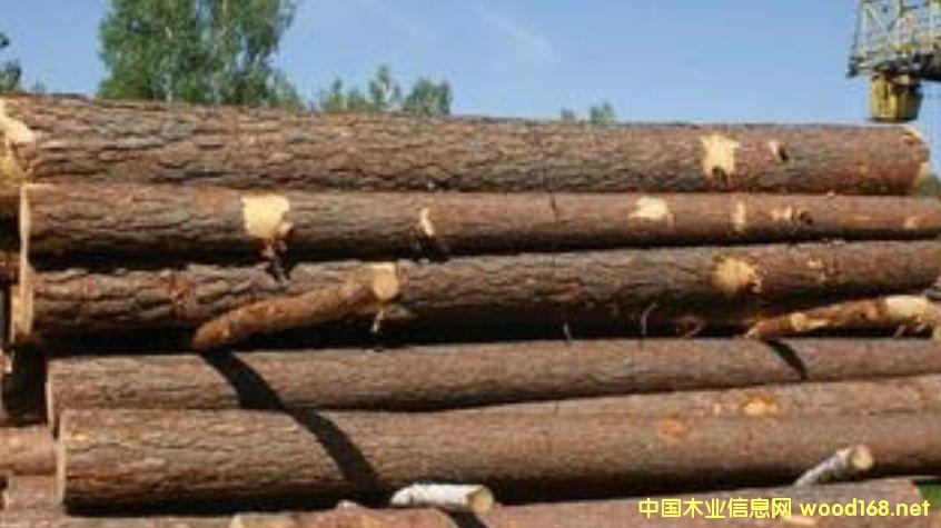 出售进口俄罗斯樟子松原木
