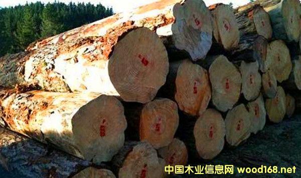出售进口新西兰辐射松原木
