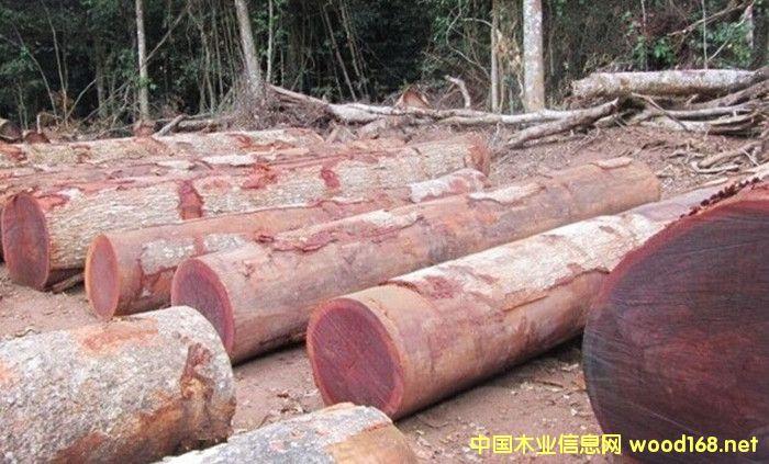 出售进口非洲沙比利原木