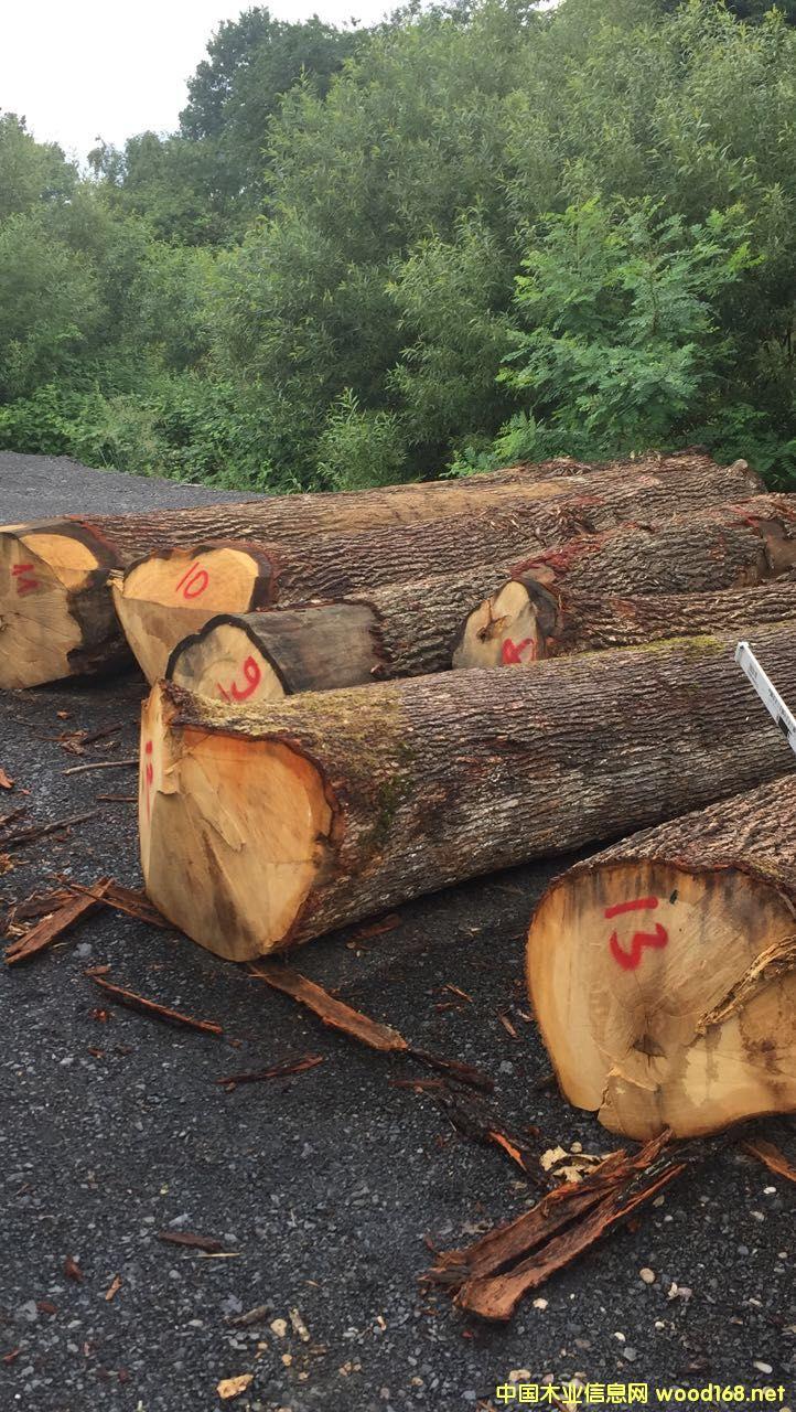 欧洲橡木原木,