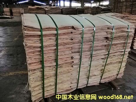 橡胶木烘干单板