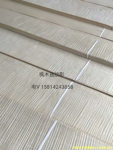 优质天然枫木直纹影木皮