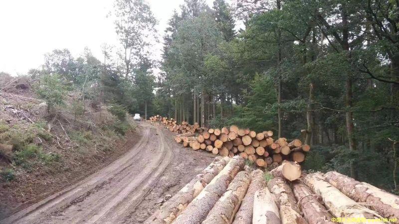 金威欧洲云杉原木ABC
