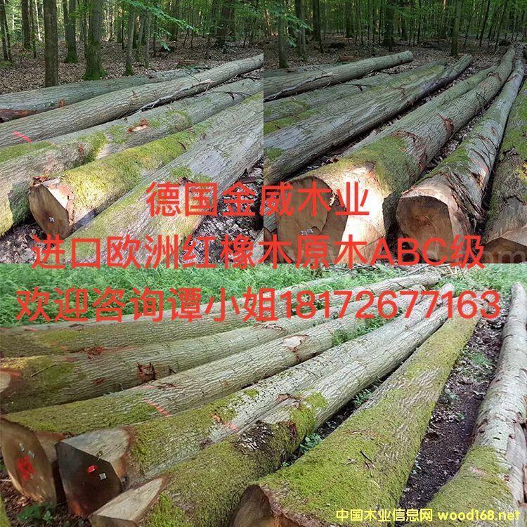 欧洲红橡原木