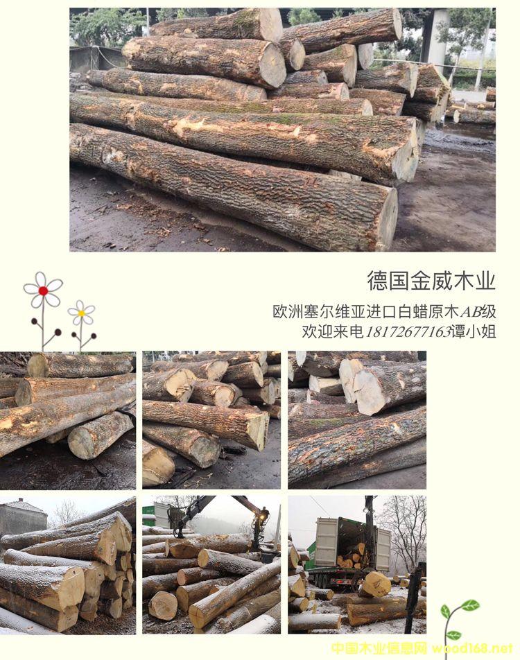 欧洲白蜡木 原木