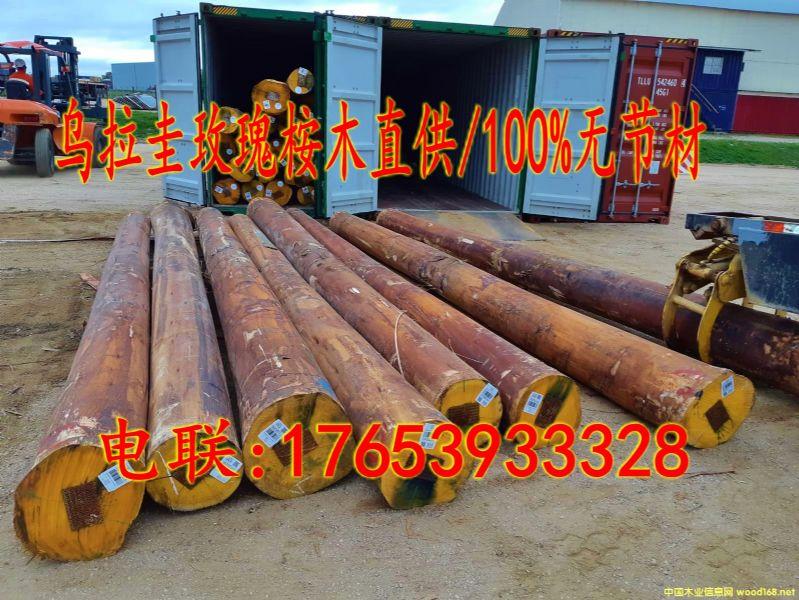 进口玫瑰桉木原木/100%无节材