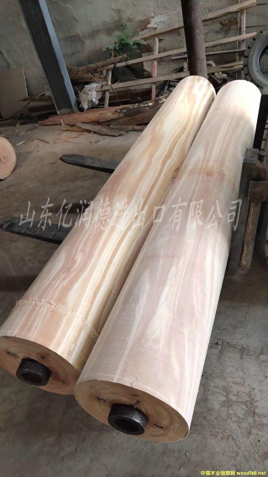 国外进口修枝材玫瑰桉木原木