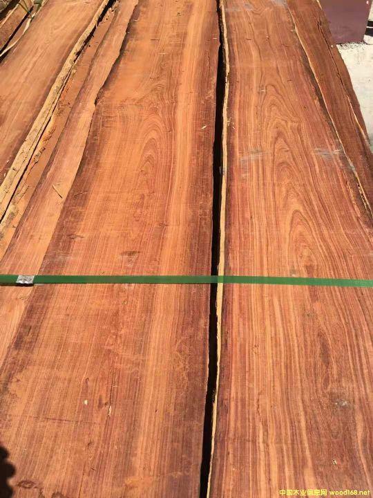 小叶红檀(马达加斯加铁木豆)