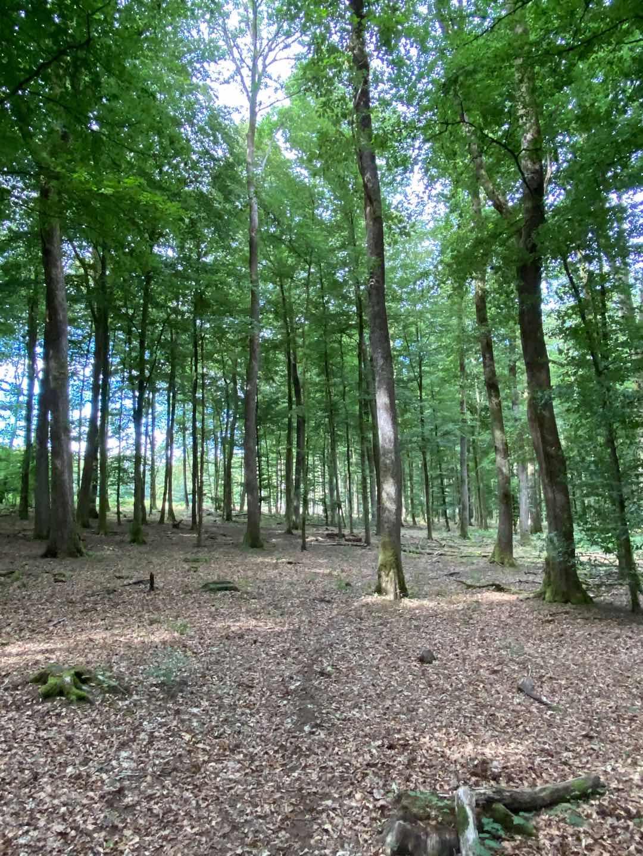 白橡木原木