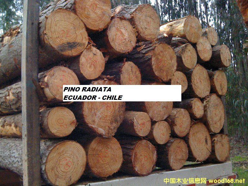 智利辐射松原木