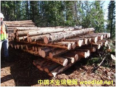 辐射松原木的详细介绍